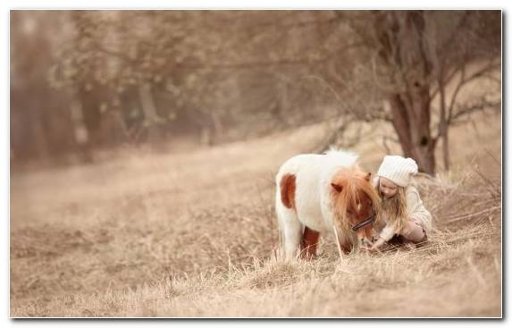 Image Pony Horse Snout Sporting Group Dog Breed