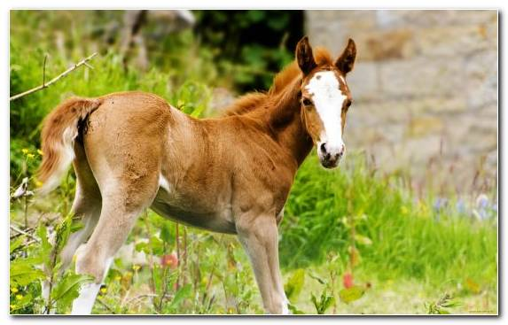 Image Pony Mane Wildlife Animal Mustang