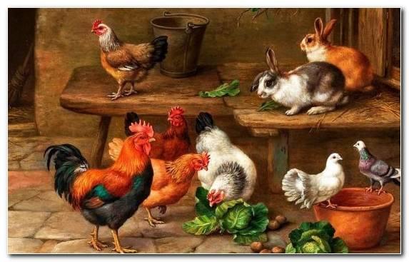 Image Portrait Artist Galliformes Oil Painting Fowl