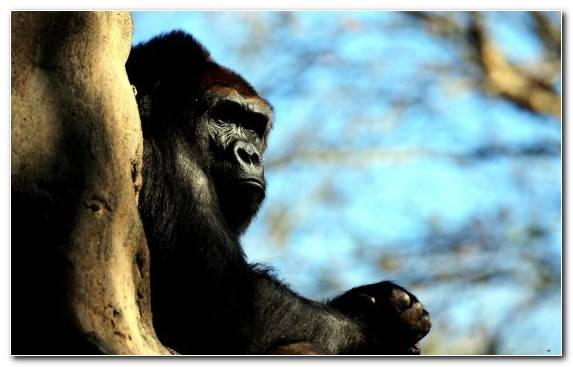 Image primate fauna mammal great ape wildlife