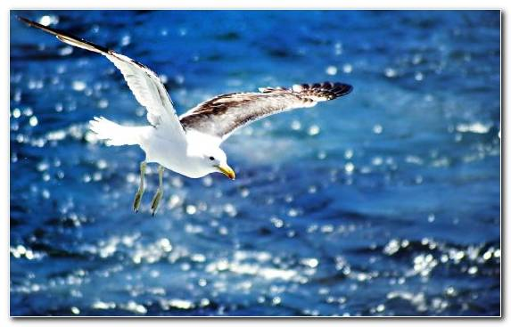 Image Publishing European Herring Gull Seabird Wildlife Catalog