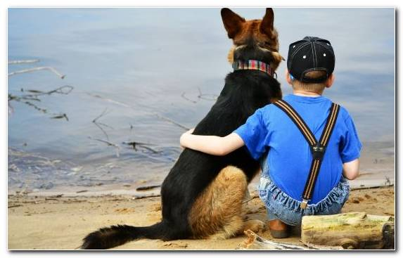 Image Puppy Animal Child Sand Friendship Day