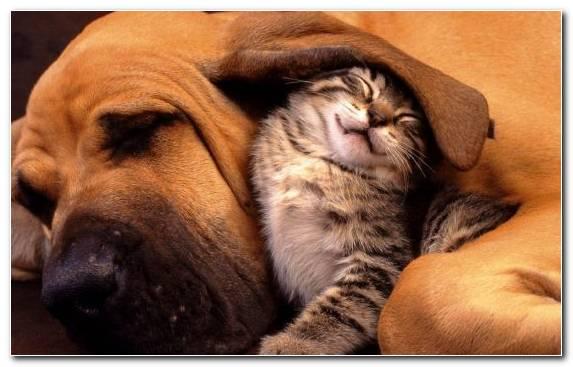 Image Puppy Love Dog Like Mammal Snout Dogcat Relationship Moustache
