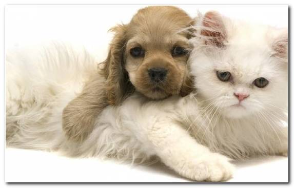 Image Puppy Moustache Whiskers Dog Like Mammal Pet Shop