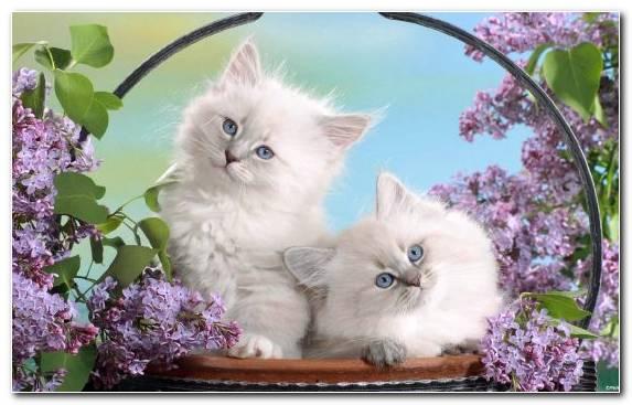 Image Puppy Persian Cat Kitten Cuteness Flower