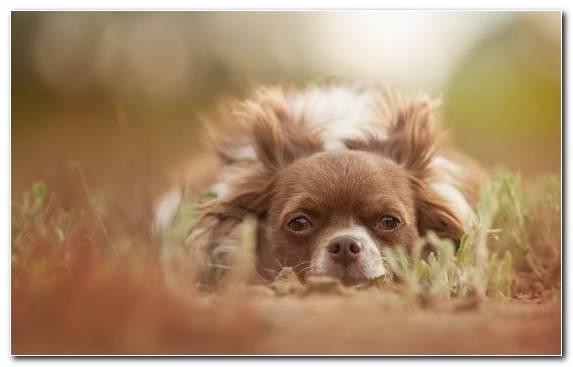 Image puppy pet snout dog breed moustache