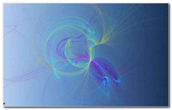 Image purple invertebrate symmetry line close up