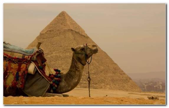 Image Pyramid Virgo Arabian Camel Zodiac Camel