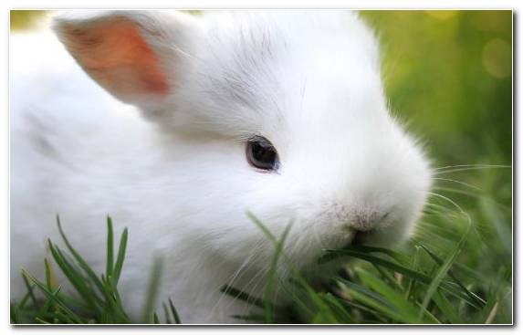 Image Rabbit Cuteness Moustache Rabits And Hares Hare