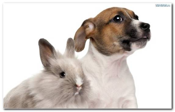 Image rabits and hares companion dog puppy cesky terrier dog like mammal