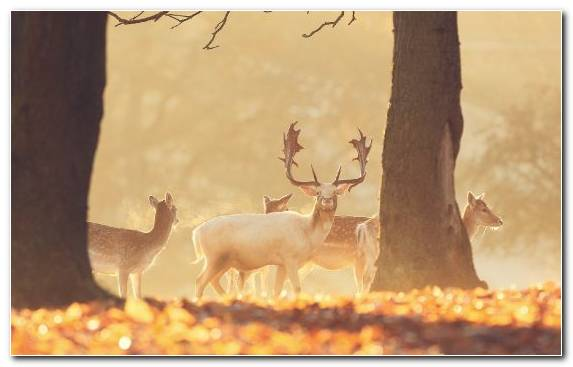 Image Red Deer Wildlife Deer Forest White Tailed Deer Deer