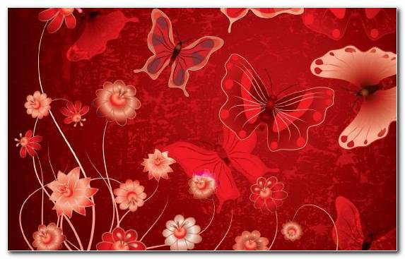Image Red Petal Vector Graphics Floral Design Insect
