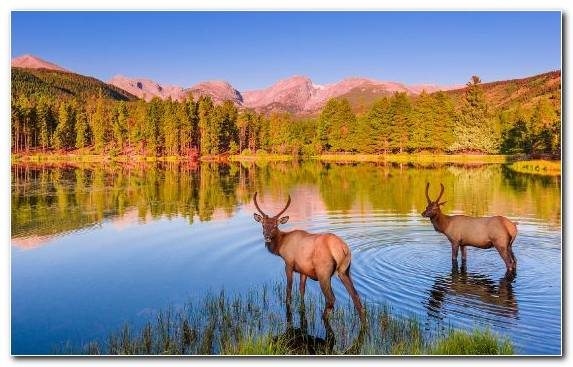 Image reflection Hidden Lake desert deer wildlife