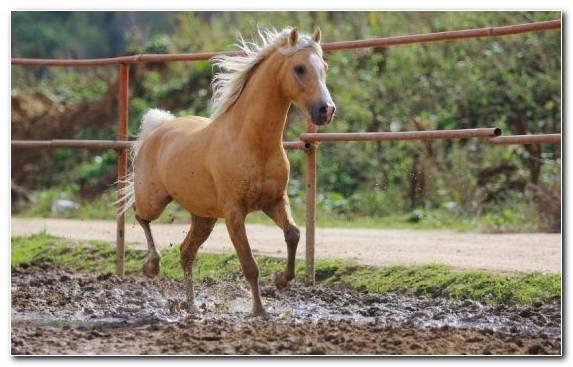 Image Rein Grazing Mane Horse Palomino