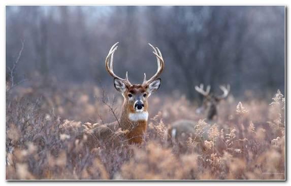 Image reindeer deer grasses grass antler