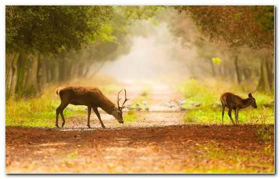 Image Reindeer Nature Reserve Grassland Ecosystem Woodland