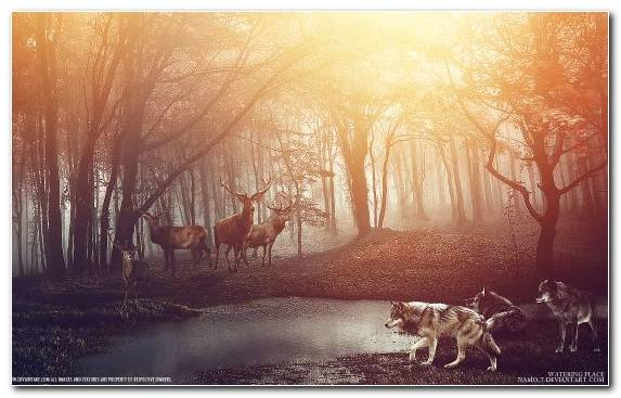 Image Reindeer Nature Sky Atmosphere Morning