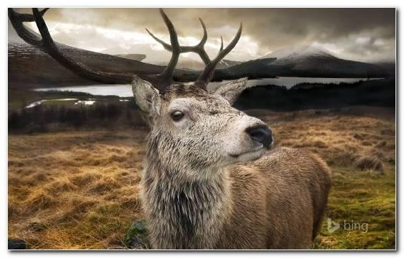 Image reindeer wildlife desert red deer deer