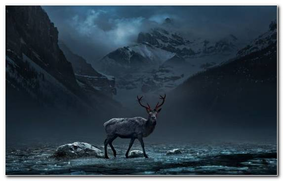 Image Reindeer Wildlife Radiation Season Winter
