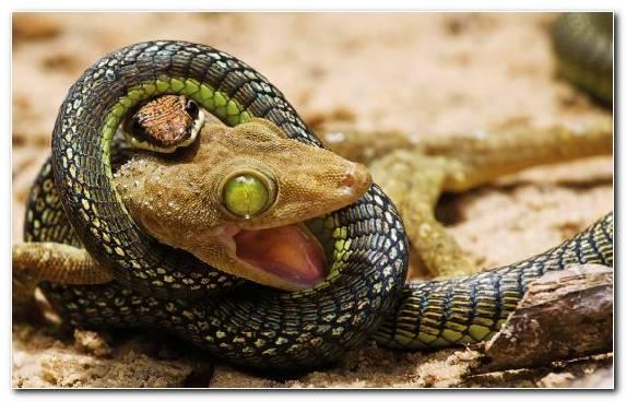 Image Reptile Portrait Viper Cool Snake Fauna