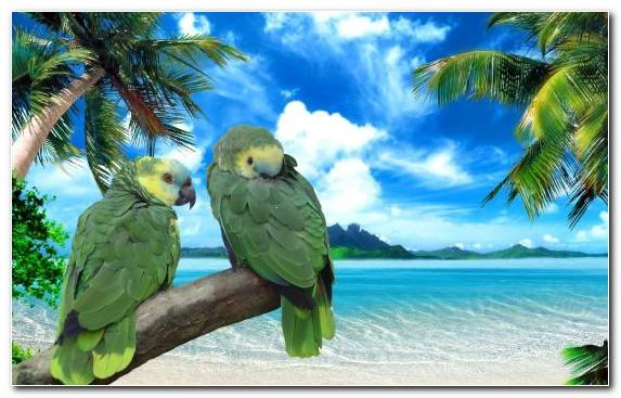 Image Room Parrot Bird Sea Macaw
