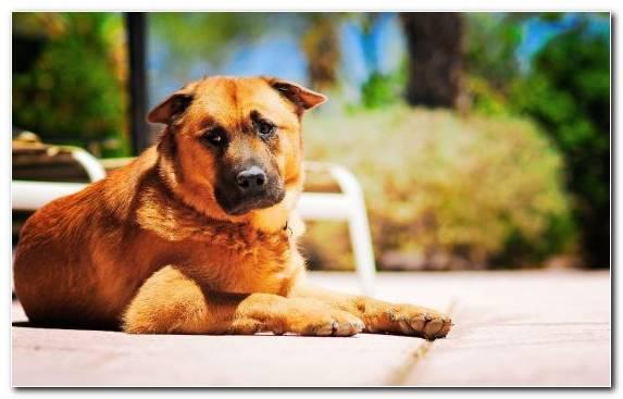 Image Sadness Dog Breed Snout Animal Street Dog