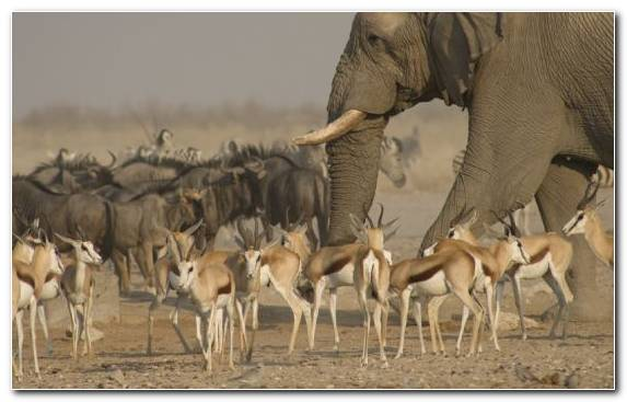 Image Safari Ecosystem National Park Terrestrial Animal Wildlife