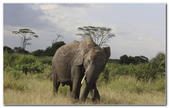 Image Safari Elephants And Mammoths Elephant Nature Reserve Mountain
