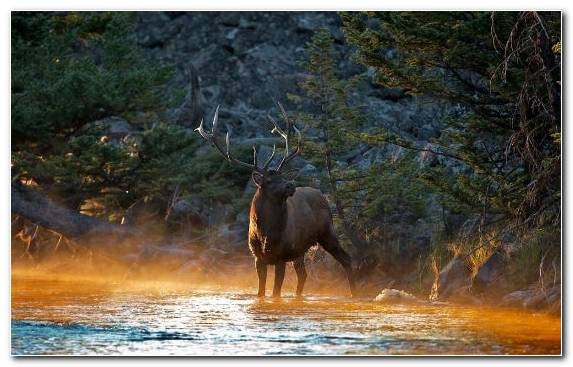 Image Safari Elk Water Wildlife Tree
