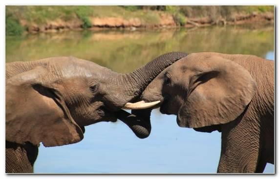 Image safari indian elephant snout africa tusk