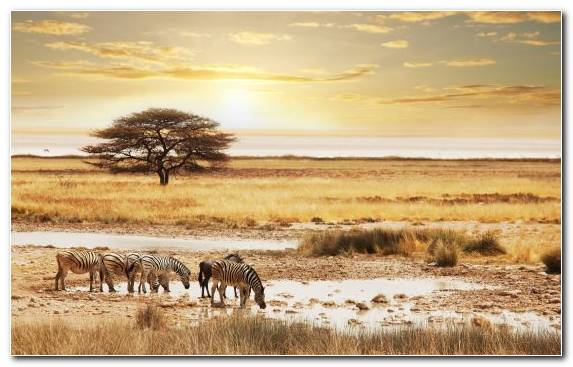 Image Safari Savanna Vector Graphics Wildlife Plain