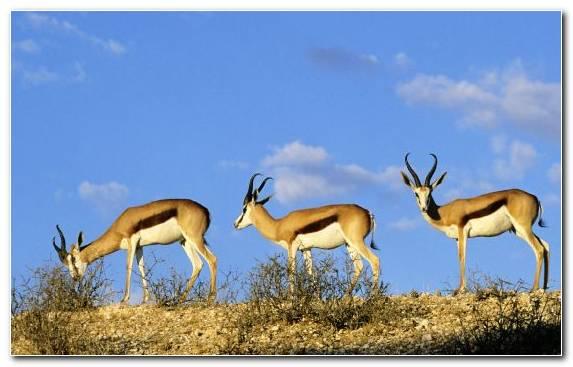 Image Safari Wildlife Kruger National Park Ecosystem National Park