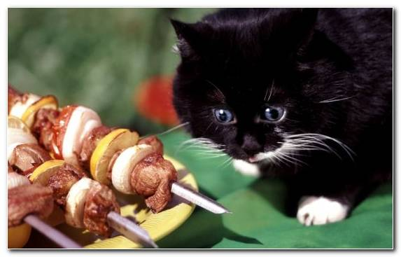 Image Saliva Snout Black Cat Taste Appetite