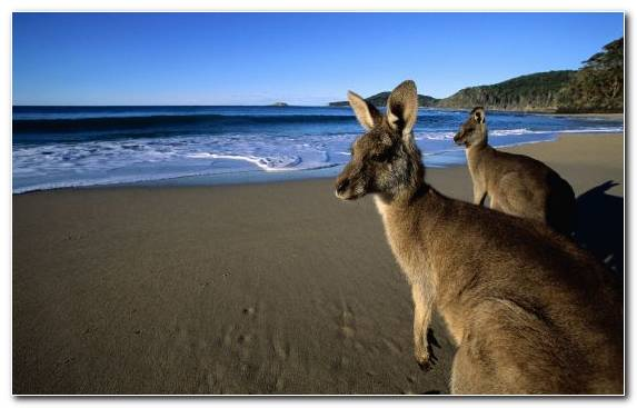 Image Sand Wildlife Top Marsupial Beach