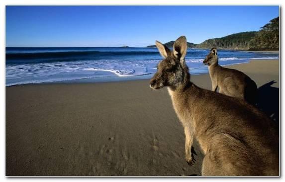 Image sand wildlife top marsupial beach