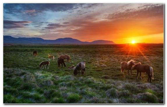 Image savanna steppe wildlife ecosystem herd