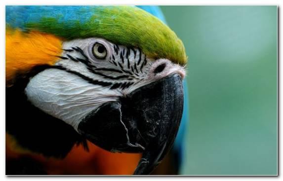 Image Scarlet Macaw Perico Bird Parakeet Beak