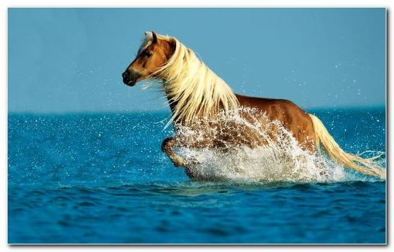 Image Sea Gallop Wave Friesian Horse Horse