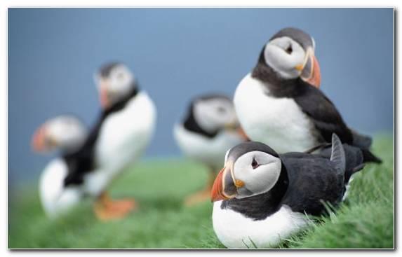 Image Seabird Bird Penguins Charadriiformes Beak