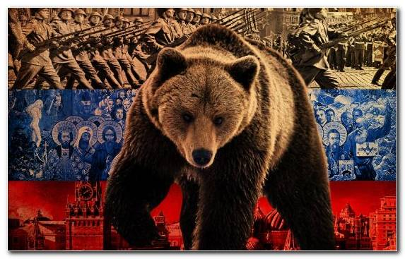 Image Second World War Russia Bear Russian Bear Brown Bear
