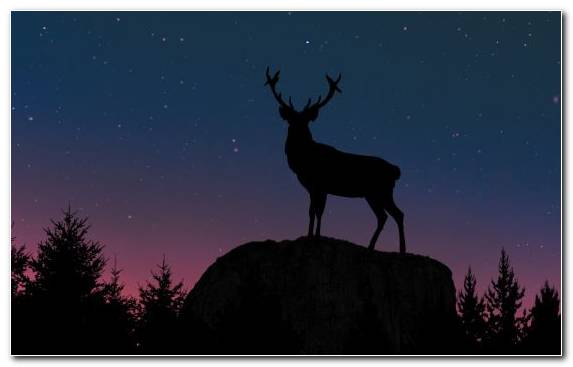 Image Silhouette Deer Wildlife Apples Apple
