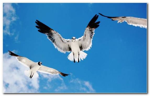 Image Sky Beak Bird Gull Seabird