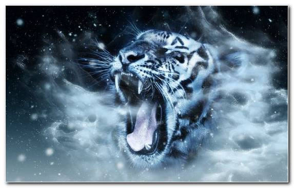Image Sky Cat Roar Black Panther Wildlife