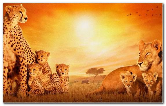 Image Sky Cat The Walt Disney Company Terrestrial Animal Savanna