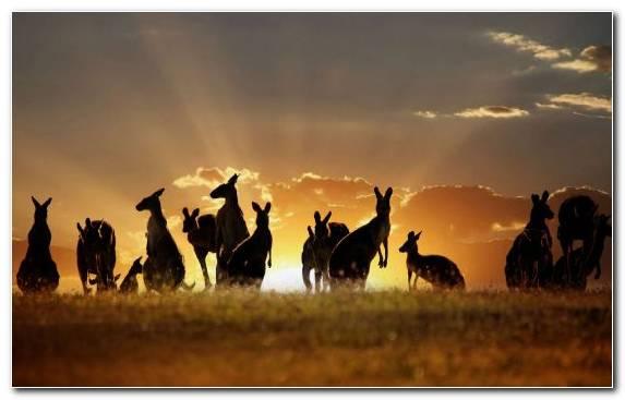 Image Sky Ecoregion Roo Grassland Herd