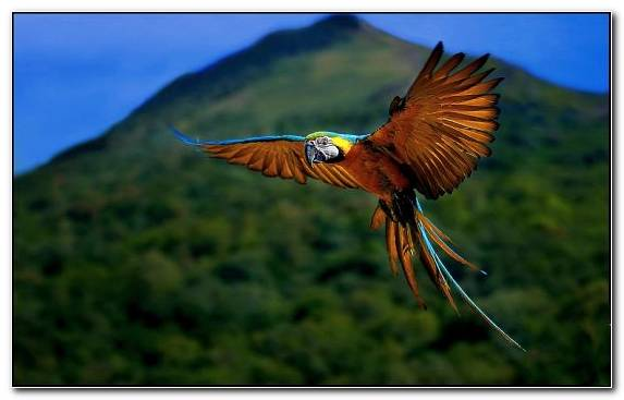 Image Sky Macaw Owl National Geographic Nature