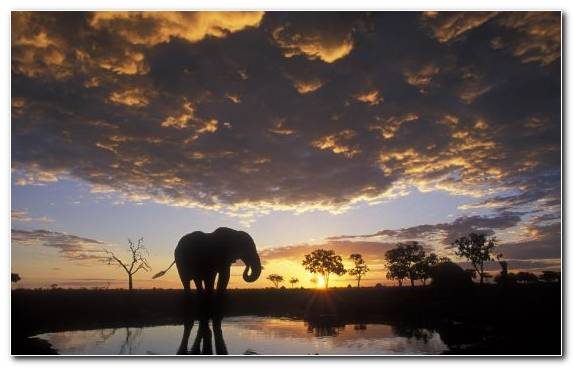 Image Sky Morning Sunrise Elephant Dawn