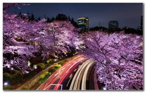 Image Sky Tokyo Flower City Urban Area