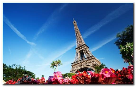 Image Sky Tower Tree Eiffel Tower Flower