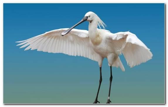 Image Sky Water Bird Pierrot Stork Bird